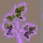 dill-parsley-sage
